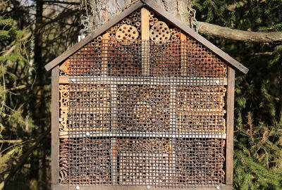 Image of Build a Bee Hotel with Beekeeper Rob Marrey in New Ross Library