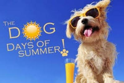 Dog Days of Summer Storytime and Craft in Enniscorthy library