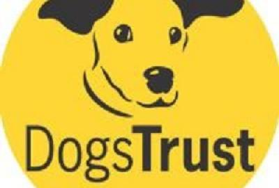Dogs Trust Workshop with Maeve
