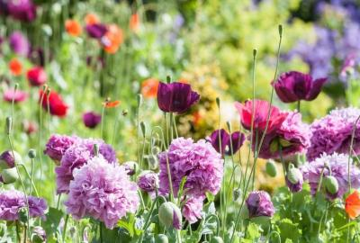 Summer Gardening Talk with Nicola Mahon, Horticulturist at Kilcannon Garden Centre