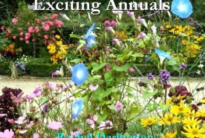 Image of poster for Exciting Annuals Gardening Talk with Rachel Darlington in New Ross Library