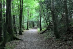 Wexford Walking Trails